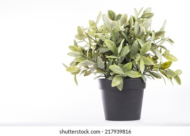 Pot tin can plant isolated with white background
