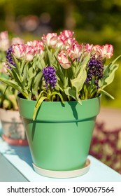 Pot with typical Dutch tulips and hyacinth flowers on sunny day
