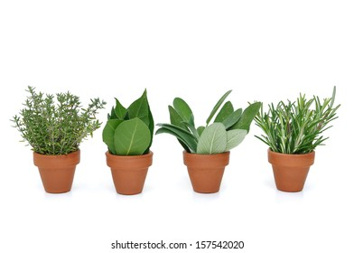pot of various herbs on white background