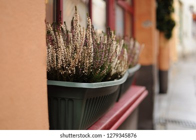 A pot of white and pink heather on the window of a narrow street house