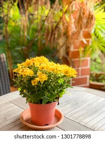A pot of yellow chrysanthemum on table in a garden