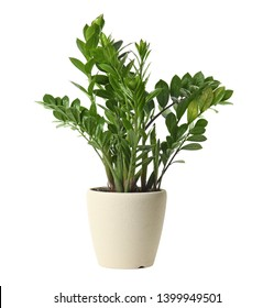 Pot with Zamioculcas home plant on white background