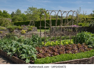 Potager  (Ornamental Vegetable or Kitchen Garden) with Home Grown Organic Produce in Rural Devon, England, UK