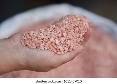 Potassium chloride, 0-0-60 ,  fertilizer in farmer hand.