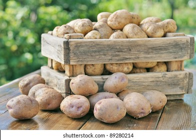Potato crop in a wooden box. Against the backdrop of a green garden.