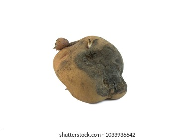 Potato diseases: Early blight . Isolated on white