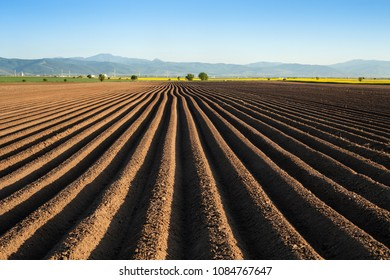 Potato field in the early spring after sowing - with furrows running towards the horizon in the late afternoon lights