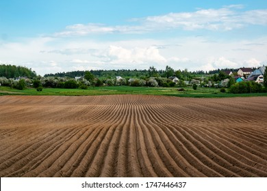 Potato field in the early spring after sowing - with furrows running towards on a large field in the village