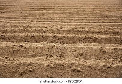 Potato field at spring