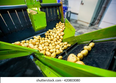 Potato sorting and packing factory eith automated machine close up