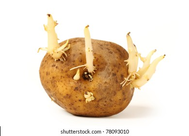 Potato Sprouts Images Stock Photos Vectors Shutterstock