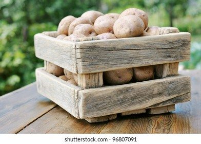 Potatoes in the box against the green of the garden. Potato crop in a wooden box.