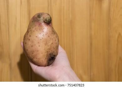 Potatoes as Homunculus loxodontus