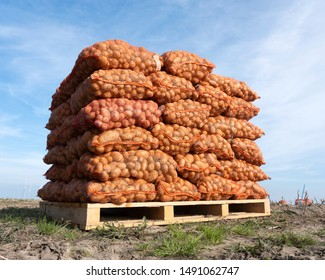 potatoes in nets on field during harvest in late summer near dokkum in dutch province of friesland under blue sky