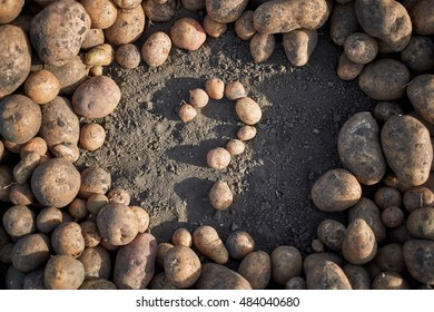 A lot of potatoes on the ground. In the middle potatoes laid out in the form of a question.