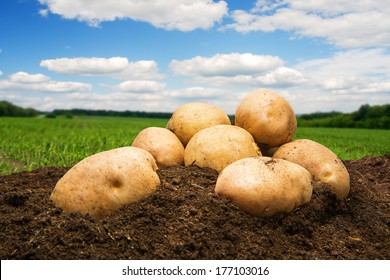 Potatoes on the ground under sky