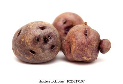 potatoes of Tenerife, Canary Islands, papa bonita, i.e. pretty potato, old variety of potatoes isolated on white background