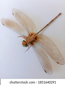 poto one of the insects belonging to the Odonata nation, the dragonfly