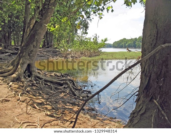 potomac river shoreline with tree roots exposed