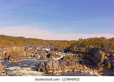 Potomac River waterfalls panorama in Great Falls state park in Virginia, USA. Great Falls state park at sunset in autumn with birds of prey circling above the rapids.