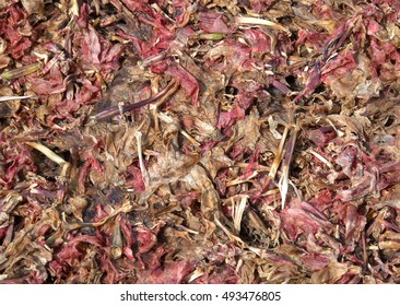 potpourri abstract background