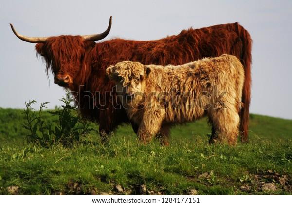 potrait-mother-child-highlander-wild-600w-1284177151.jpg