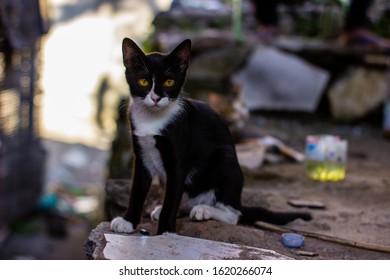 Potret seekor kucing liar yang baru saja bangun di luar. Hewan domestik yang lucu. Hewan peliharaan bersantai di bengkel sepeda motor.