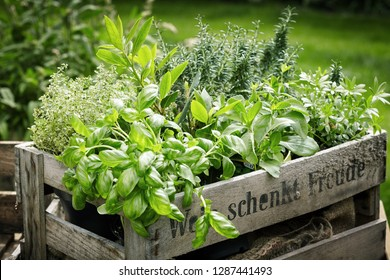 Pots of assorted fresh aromatic culinary herbs in a wooden crate in a garden for use in cooking and herbal remedies