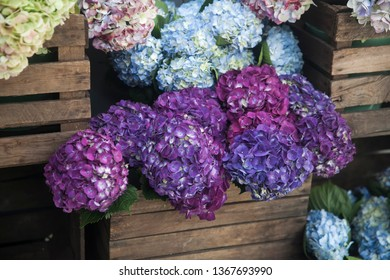 Pots with beautiful blooming pink and purple hydrangea flowers for sale outside flower shop. Garden store entrance decorated with rustic style wooden box and wicker flower pots.