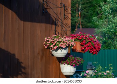 Pots of bright calibrachoa flowers hanging on a wooden wall. Flower pots lit by the sun