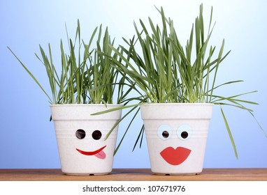 A pots of grass on blue background