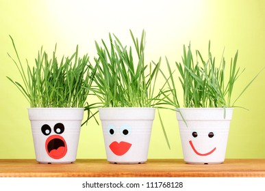 A pots of grass on green background