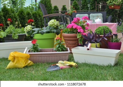 Pots with lush flowers and plant in a garden in springtime