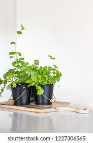 Pots of parsley herbs on a wooden copping board