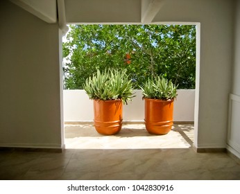 Potted Aloe Plants in Hallway