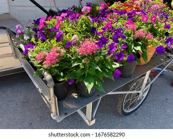 Potted annual flowers in a cart at gardening center.