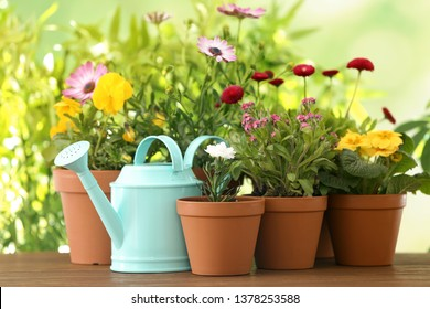 Potted blooming flowers and watering can on wooden table. Home gardening