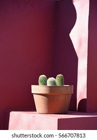 Potted cactus in front of a wall painted pink