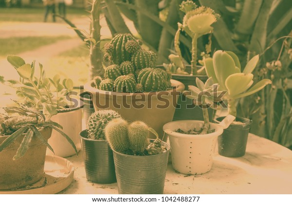 Potted cactus on table.