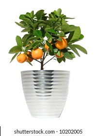 potted citrus tree in a metallic pot, isolated