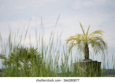 potted fan palm trees in a garden