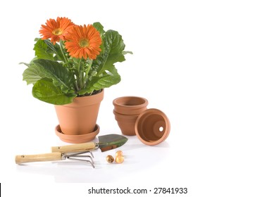 potted flower and gardening equipment