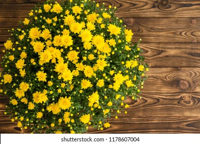 Potted fresh yellow fall chrysanthemum on a rustic wooden table viewed from the top down with copy space
