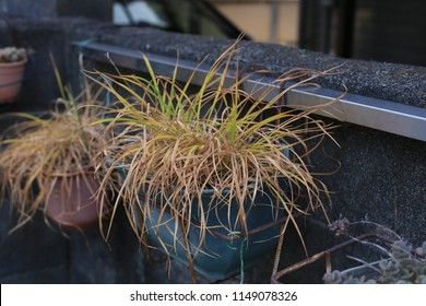 Potted grass outside Tokyo home
