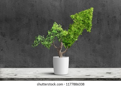 Potted green plant grows up in arrow shape over dark background. Concept business image
