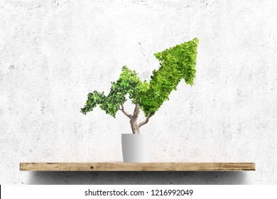 Potted green plant grows up in arrow shape over concrete wall background. Concept business image