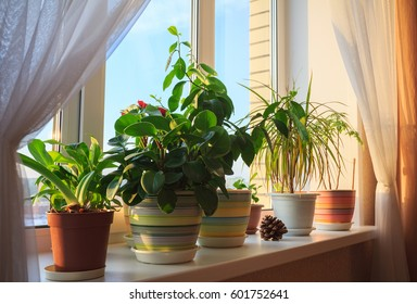 Potted green plants on window