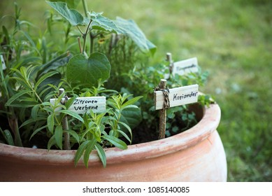 potted herb garden with plant markers in german language, meaning lemon verbena and coriander, selected focus, narrow depth of field