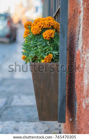 Potted Marigoldsorange Marigolds Potted Metal Planter Stock Photo