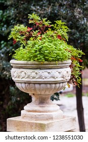 a potted plant in a beautiful, ancient vase in an ornamental garden